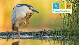 """Naturführungen in Bayern: """"Natur erleben und verstehen"""" ist das Motto von Deutschlands größter Umweltbildungsaktion."""