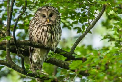 Zum Internationalen Tag zur Erhaltung der Artenvielfalt am 22. Mai 2019
