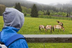 Tour durch das Tier-Freigelände Falkenstein