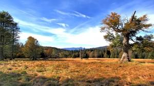 Herbst auf dem Hochschachten