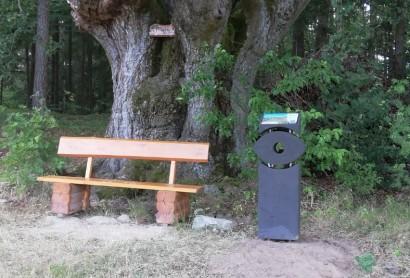 Oberpfälzer Wald Infostele Natur-Navi an der alten Buche beim Waldfriedhof Friedenfels