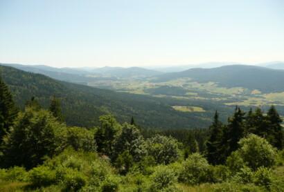 """Impulse und Empfehlungen der Bundesplattform """"Wald – Sport, Erholung, Gesundheit"""""""