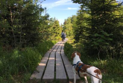 """Bello darf mit: Outdoorbegeisterte Hundebesitzer finden im Bayerischen Wald eine Vielzahl """"vierbeinfreundlicher"""" Wanderwege, Unterkünfte und Angebote"""