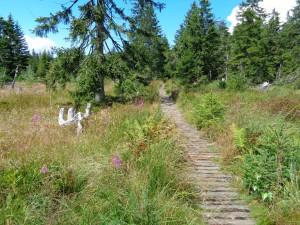 Idyllische Wanderwege führen durch den Oberpfälzer Wald und Bayerischen Wald