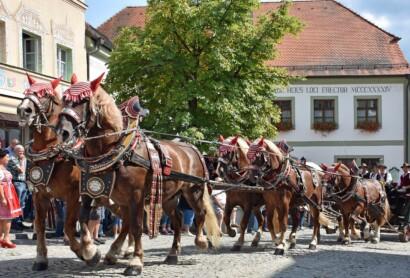 Rösser und Reiter: Kötztinger Rosstag