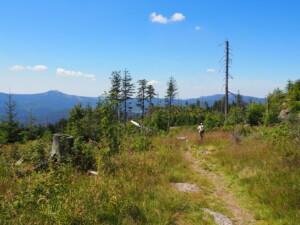 Die Waldvereine leisten einen wichtigen Dienst für den Erhalt und die Pflege der Wanderwege