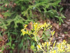 Biene und Schmetterling an einer Blüte
