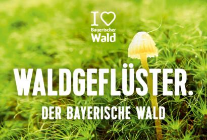"""Tourismusverband Ostbayern startet groß angelegte Image-Kampagne """"I ♥︎ Bayerischer Wald"""""""