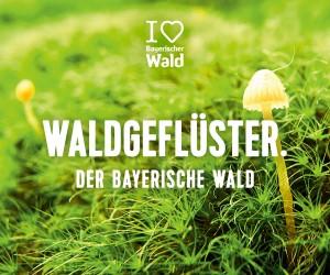 Waldgeflüster Bayerischer Wald