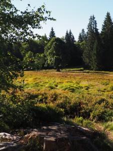 Lindbergschachten im Nationalpark