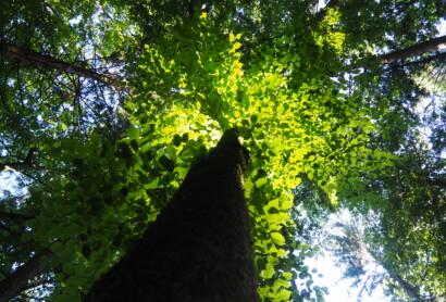 Der Wald ist Zukunft