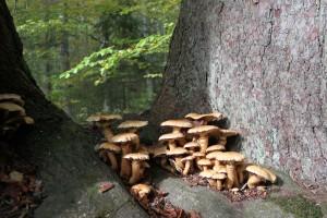 Waldwelt Bayerischer Wald