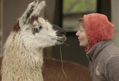 Sendehinweis BR: Wintergeschichten aus dem Oberpfälzer Wald
