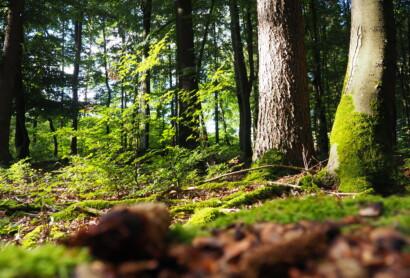 Vollzugshinweise zum Bayerischen Naturschutzgesetz